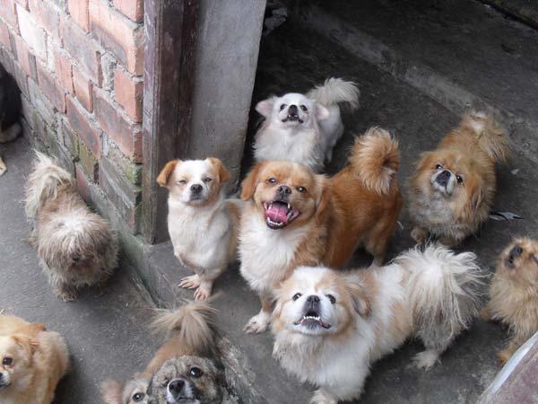 杨利平收养的流浪狗